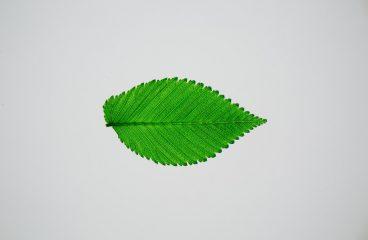 Pourquoi installer des toiles écologiques pour sa communication ?